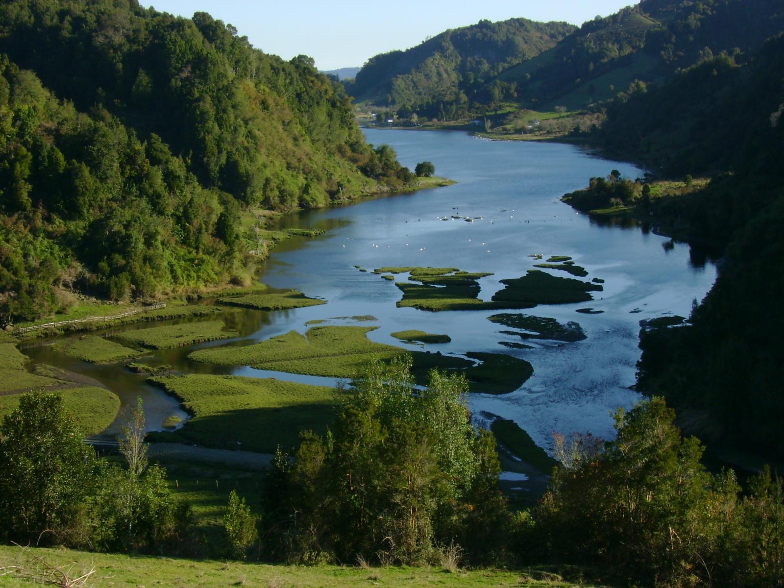 Humedal de Tocoihue